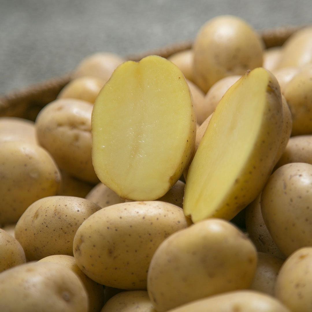 kilo kartoffeln preis